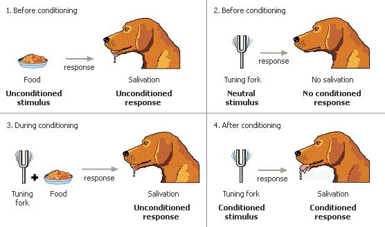 Classical conditioning learning examples.